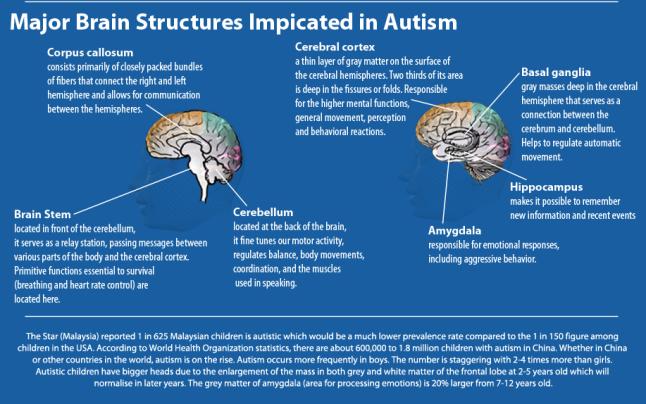 autism-diagram